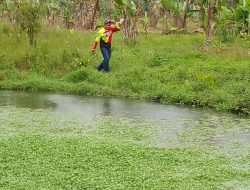 Mengeruk Rupiah dari Cocok Tanam Selada Air